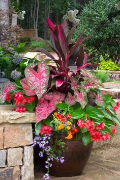 Potted Plants for Shade.  The main dark leaved plant with pink is Dracena 'baby doll', the pink and green speckled heart shaped leaf on the left is a Caladium, the reddish flowers are from the begonia 'angel wing', the purple trailing plant is Scaevola, the yellow one is Bidens.
