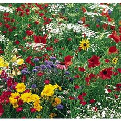 Midwest wildflower mix from American Meadows.