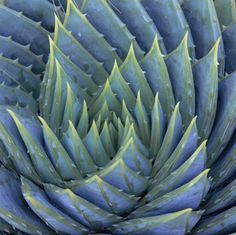 blue spiky spiral
