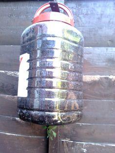 upsidedown tomato, outdoor craft, child crafts, children craft, tomato planter