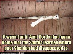poor Sheldon