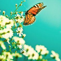 flutterby.
