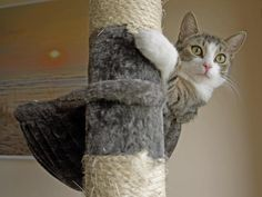 Put a scratching post that matches what they're destroying (vertical/horizontal, rough/smooth, hard/soft) next to that item. >> http://www.hgtv.com/decorating-basics/how-to-outsmart-your-cat-and-have-a-stylish-home/pictures/index.html?soc=pinterest