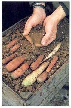 Vegetable storing tips