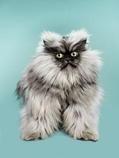 10 of Colonal Meow (R .I.  P. Colonel Meow passed away yesterday evening. +)
