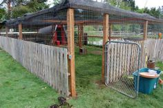 Duck and chicken compound made with recycled pallets, wire fencing ...