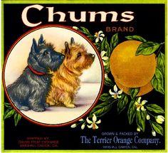 Chums Scotttsh Terrier orange crate label