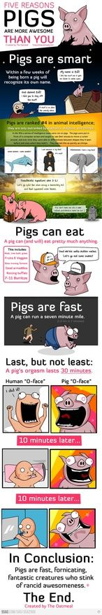 pigs are pigs made-me-laugh