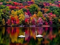 Amazing Places In The World You Must Visit In Autumn, Autumn in New Hampshire, USA