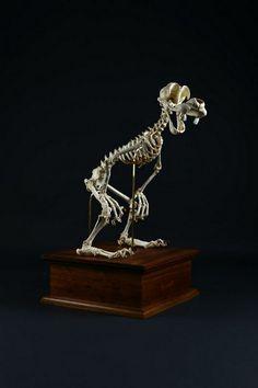Así lucen los esqueletos de tus dibujos animados favoritos