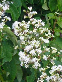 Great Plants for Midwest Gardens