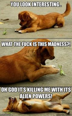 That would be my dog...