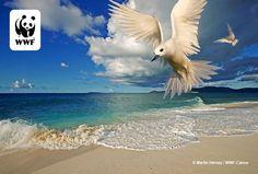Şeyseller @WWF_TURKIYE