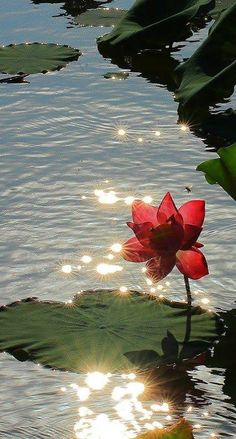 Sun diamonds on the lake!