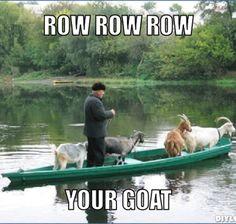 Row Row Row your goat!