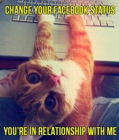 Adorable Facebook cat.