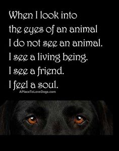 When I look into the eyes of an animal I do not see an animal. I see a living being. I see a friend. I feel a soul. quote by Anthony Douglas Williiams. | Quote