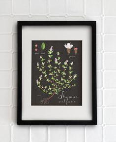 Eva Juliet - Thyme Print