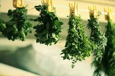 Everything You Need to Know About Harvesting and Preserving Herbs