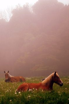 Horses in the mist...
