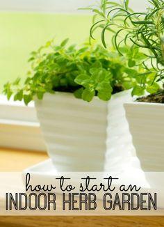 How to Start an Indoor Herb Garden