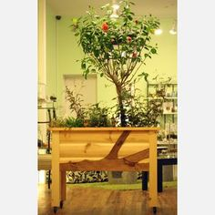 Twig Unbound Planter now featured on Fab.