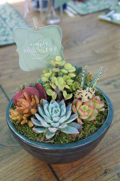 Simply Succulent arrangement https://www.facebook.com/pages/Simply-Succulent/222665291108990