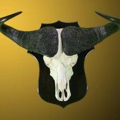 Buffalo Shield mount