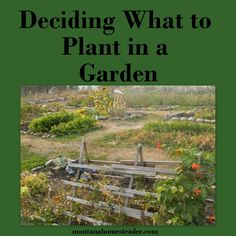 Tips to help you figure out which plants to grow in a garden and how many you need to grow to feed yourself for a year. ~Montana Homesteader~