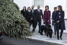 Michelle Obama and daughters Sasha and Malia welcome the White House Christmas tree
