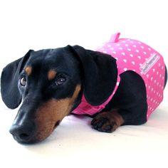 dachshund, weiner dog
