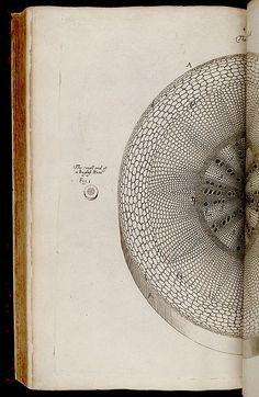 The Anatomy Of Plants.  Nehemiah Grew. 1641-1712.