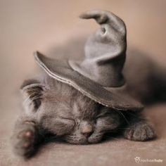 A witch cat.