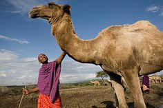 Give a Camel: A Gift that's in it for the Long Haul