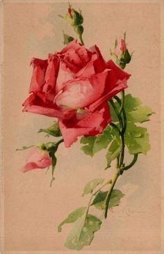 vintage red rose image