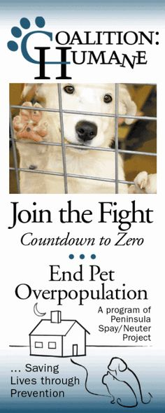 dog free, family dogs, dog breed, cage dog, willow rescu, rescu shelter, anim lover, famili dog, canin journal