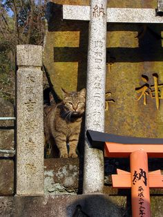 Fushimi-Inari, Kyoto