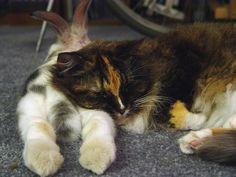 Fuzzy bunny butt pillow