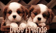 Love those doggies!