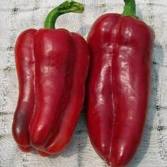 Organic Heirloom Red Marconi Sweet Pepper Seeds by kenyonorganics,