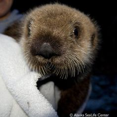 FedEx helps orphaned sea otter pup find new home at Pittsburgh Zoo & PPG Aquarium