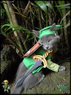 Cat dressed as Link. Zelda.