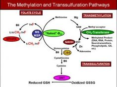 Methylation and Transsulfuration Pathways
