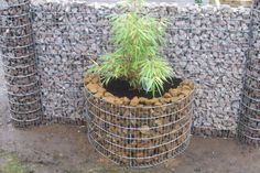 WALL PLANTER  This planter comes in two heights the 400mm & 800mm. You simply place against a wall and fill with stone then plant up, either with compost or place plant directly inside. The grading for stone 75mm-25mm.