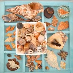display of seashells collected in guantanamo bay cuba