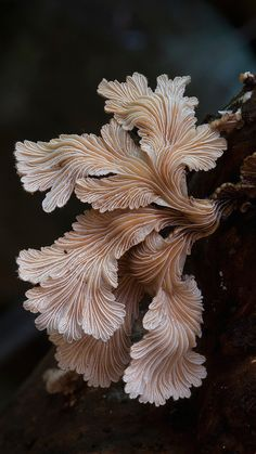 gilled funghi