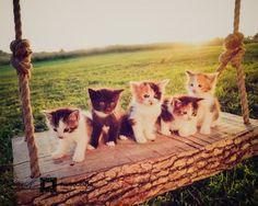 kittens on a swing cats, anim, pet, swings, ador, kittens, kitti, kitty, thing