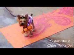 DOG YOGA BY SMARTY PANTS CHLOE POLKA DOT