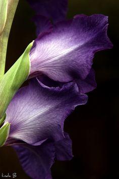 <3 Purple Flowers