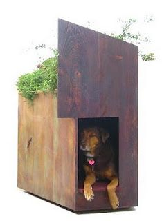 sustainable dog house with a green roof!